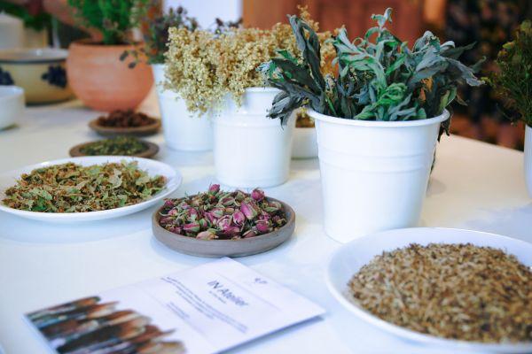 plante ceai