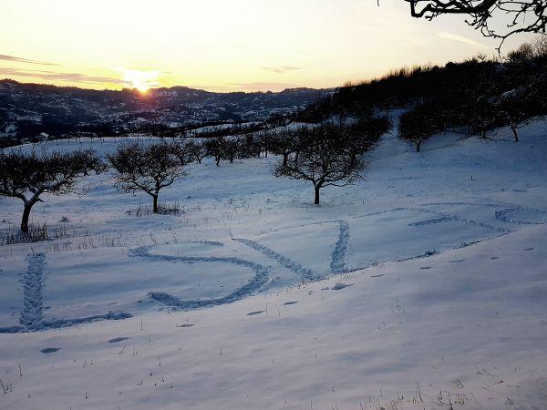 Dealul cu Soare_livada