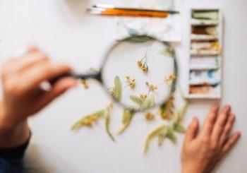 Iubești natura? Vara asta, fă-ți un ierbar și învață să pictezi flori de la Irina Neacșu.