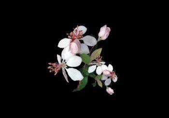#OrașulFetelor: Vizită de marți cu flori de măr și alabastru